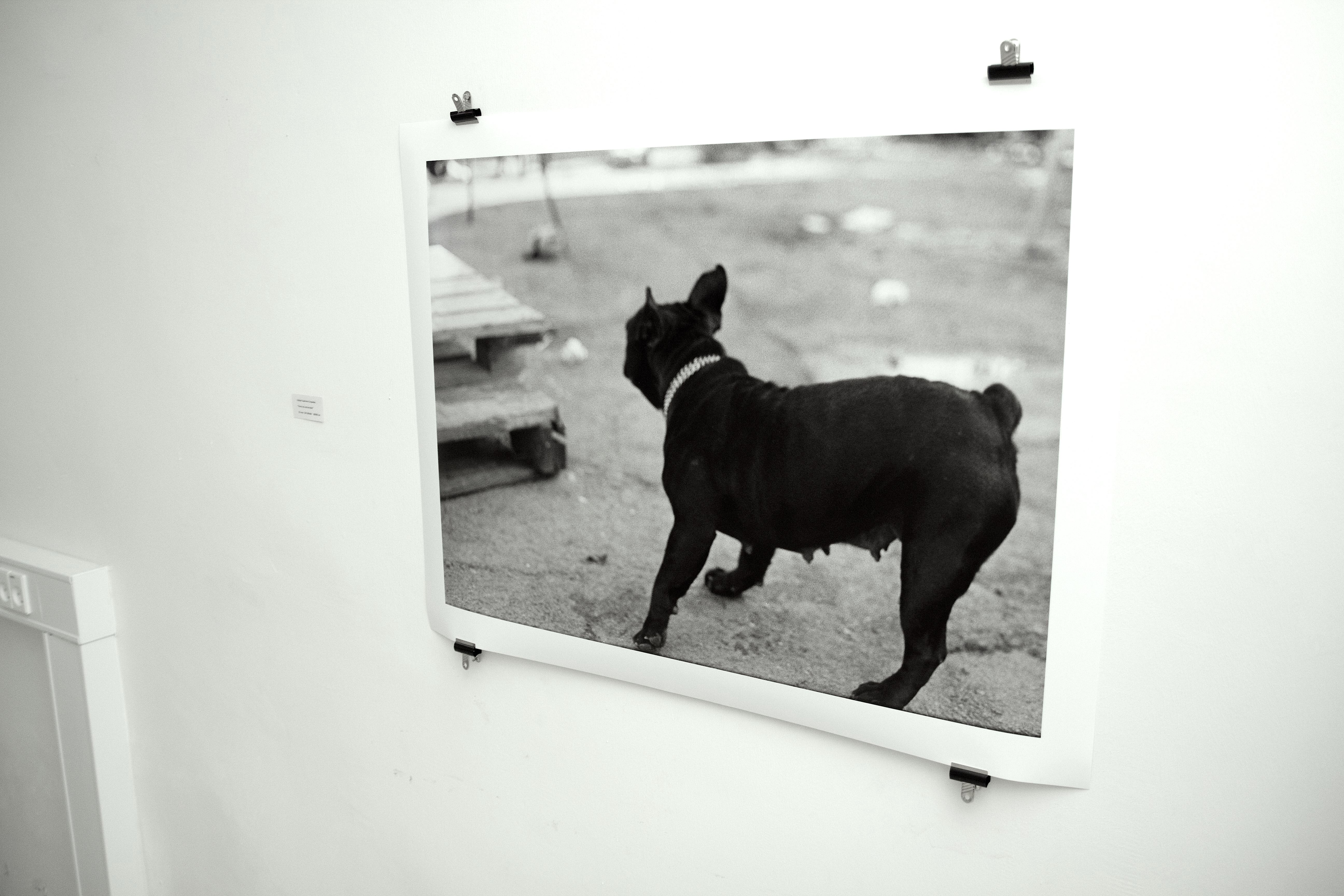 posters-prints, photographs, expressive, figurative, monochrome, portraiture, animals, everyday life, humor, movement, pets, beige, black, photographs, amusing, black-and-white, contemporary-art, cute, day, decorative, dogs, modern-art, nordic, outdoors, posters, pretty, scandinavien, silhouette, streets, urban, vibrant, Buy original high quality art. Paintings, drawings, limited edition prints & posters by talented artists.