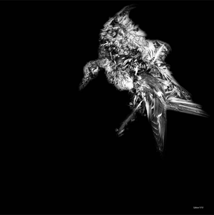black and white bird aesthetic, stylish, beautiful, artistic photographs for sale - online contemporary art