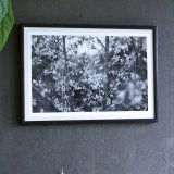 posters-prints, photographs, aesthetic, landscape, monochrome, still-life, botany, moods, nature, seasons, black, grey, white, photographs, atmosphere, beautiful, black-and-white, contemporary-art, decorative, farm, flowers, forest, horizontal, love, natural, naturalism, nordic, outdoors, photorealistic, realism, romantic, spring, tranquil, trees, weird, wild, Buy original high quality art. Paintings, drawings, limited edition prints & posters by talented artists.