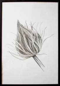 drawings, aesthetic, family-friendly, figurative, landscape, monochrome, botany, black, white, paper, pencils, beautiful, black-and-white, flowers, interior, interior-design, natural, naturalism, plants, pretty, Buy original high quality art. Paintings, drawings, limited edition prints & posters by talented artists.